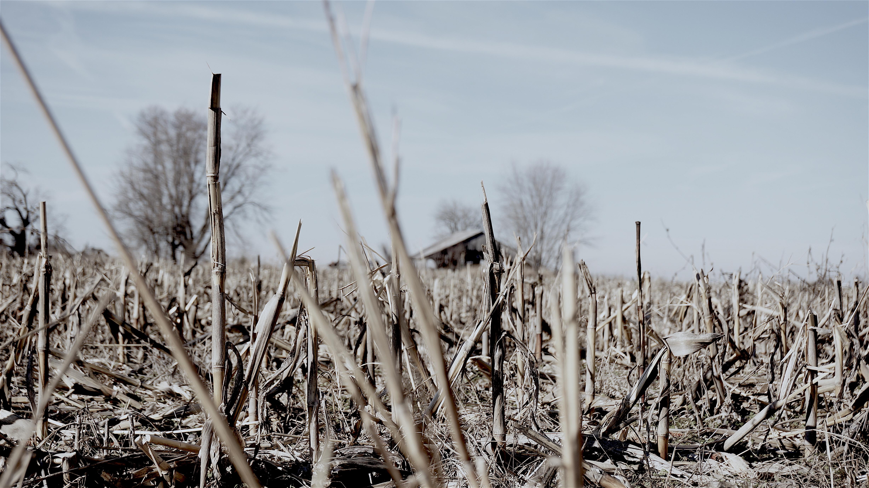 Rural Missouri During Harvest Time